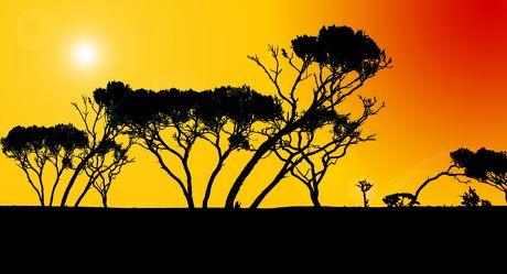 Bild mit Menschen,Farben,Gelb,Natur,Pflanzen,Bäume,Landschaften,Ödland,Himmel,Sonnenuntergang,Horizont