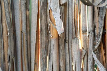 Bild mit Gegenstände,Natur,Pflanzen,Materialien,Holz,Schilf,Struktur,Pflanze,Schilfgras
