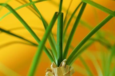 Bild mit Farben,Grün,Natur,Pflanzen,Blumen,Gräser