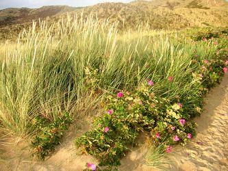 Bild mit Natur,Pflanzen,Gräser,Landschaften,Weiden und Wiesen,Blumen,Sträucher,Buschland