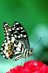 Bilder mit Insekten
