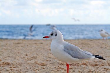 Bild mit Gegenstände,Tiere,Natur,Landschaften,Himmel,Gewässer,Küsten und Ufer,Materialien,Meere,Strände,Stein,Sand,Vögel,Wasservögel,Möwen
