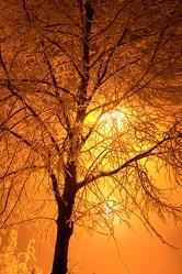 Bild mit Natur,Pflanzen,Bäume,Farben,Orange,Himmel,Sonnenaufgang,Abendrot,Sonnenuntergang,Landschaften,Gelb
