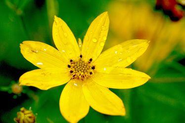 Bild mit Farben, Gelb, Natur, Pflanzen, Blumen
