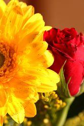 Bild mit Farben,Gelb,Gegenstände,Natur,Pflanzen,Blumen