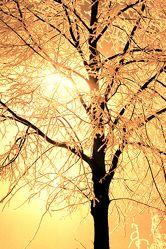 Bild mit Farben,Gelb,Natur,Pflanzen,Himmel,Bäume,Jahreszeiten,Herbst