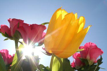 Bild mit Natur,Pflanzen,Blumen,Jahreszeiten,Frühling,Farben,Gelb,Himmel
