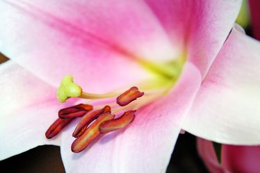 Bild mit Farben,Weiß,Rosa,Natur,Pflanzen,Blumen,Jahreszeiten,Frühling