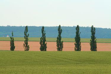 Bild mit Natur,Pflanzen,Gräser,Landschaften,Himmel,Bäume,Weiden und Wiesen,Nadelbäume