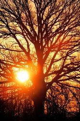Tree of Life 4