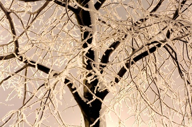 Bild mit Natur, Pflanzen, Bäume, Schnee, Eis, Baum, Pflanze, Tree, Trees