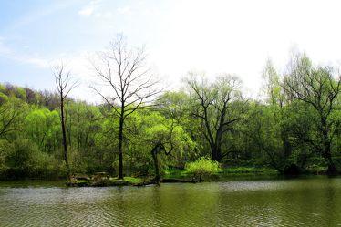 Bild mit Natur,Wasser,Grün,Pflanzen,Landschaften,Bäume,Gewässer,Küsten und Ufer,Wälder,Seen,Flüsse,Teiche