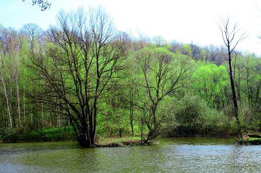 Bild mit Farben, Natur, Elemente, Wasser, Grün, Pflanzen, Landschaften, Bäume, Jahreszeiten, Gewässer, Küsten und Ufer, Wälder, Flüsse, Frühling