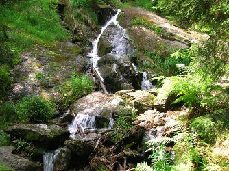 Bild mit Natur,Elemente,Wasser,Pflanzen,Landschaften,Bäume,Gewässer,Küsten und Ufer,Wälder,Flüsse,Wasserfälle,Schluchten,Wald,Bach,Waldbach,Wasserfall,Bach im Wald,Gewässer im Wald