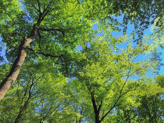 Bild mit Natur,Pflanzen,Bäume,Farben,Grün,Landschaften,Wälder,Jahreszeiten,Herbst,Himmel,Tageslicht,Frühling